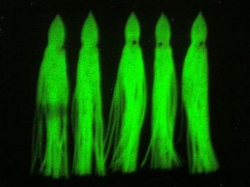 10Pcs 150mm  Luminous SQUID SKIRTS